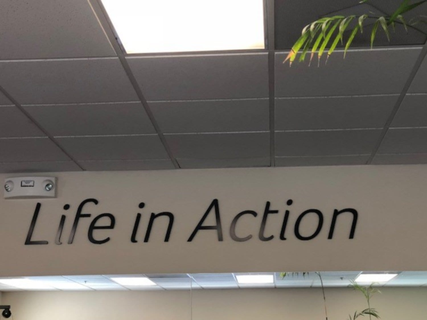 An image of the words: Life in Action displayed on our wall in our physical therapy clinic in Hazlet, New Jersey.