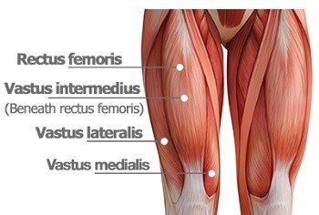 "Two Myths That Will Not Go Away: Isolation Training of the Vastus Medialis Obliquus (VMO) and the ""Stretching"" of the Iliotibial Band (ITB)"